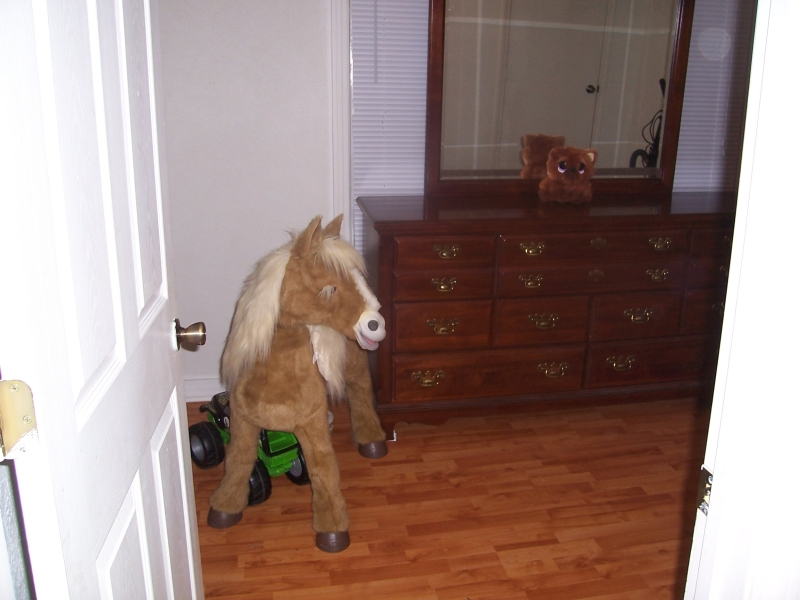 Buttercup the scary horse